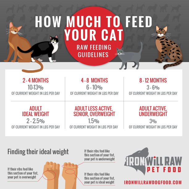 How Much Raw Food Should I Feed my Cat?