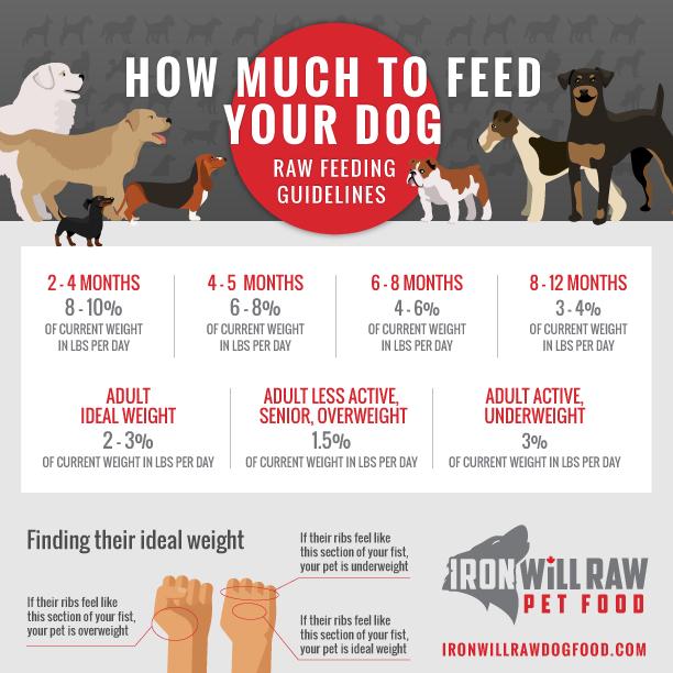 IronWill-FeedingGuide-IGdog