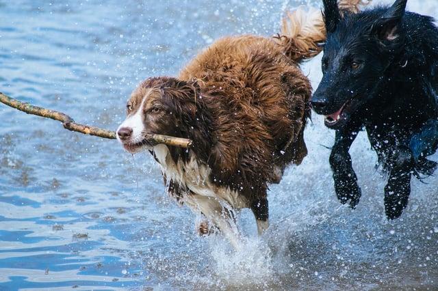dogs-1246588_1280.jpg