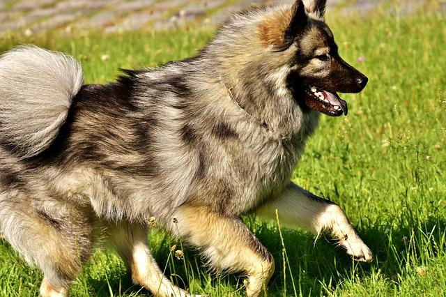 healthy dog coat