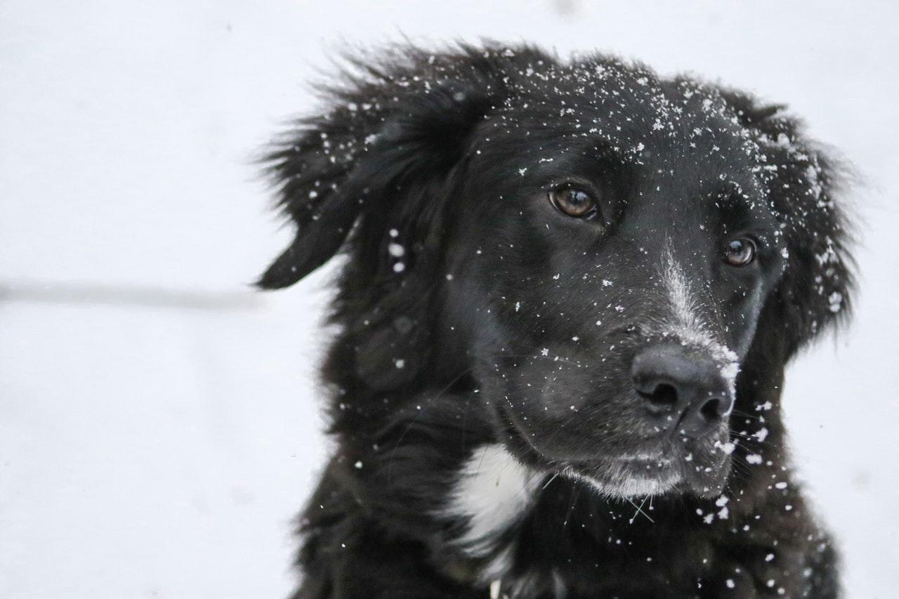 feeding raw pet food in winter