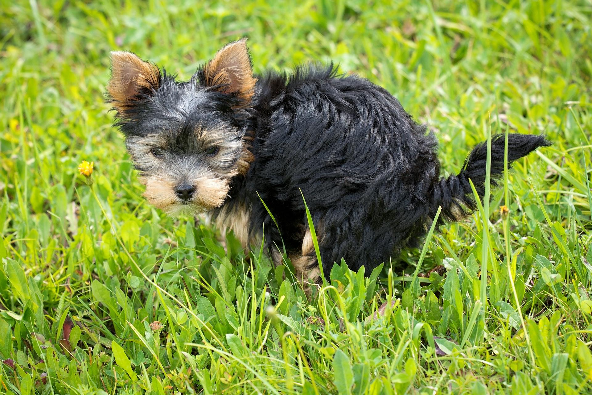 raw pet food and poop