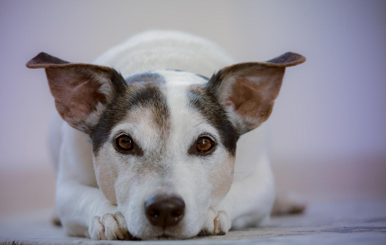 how much raw food should i feed my dog?