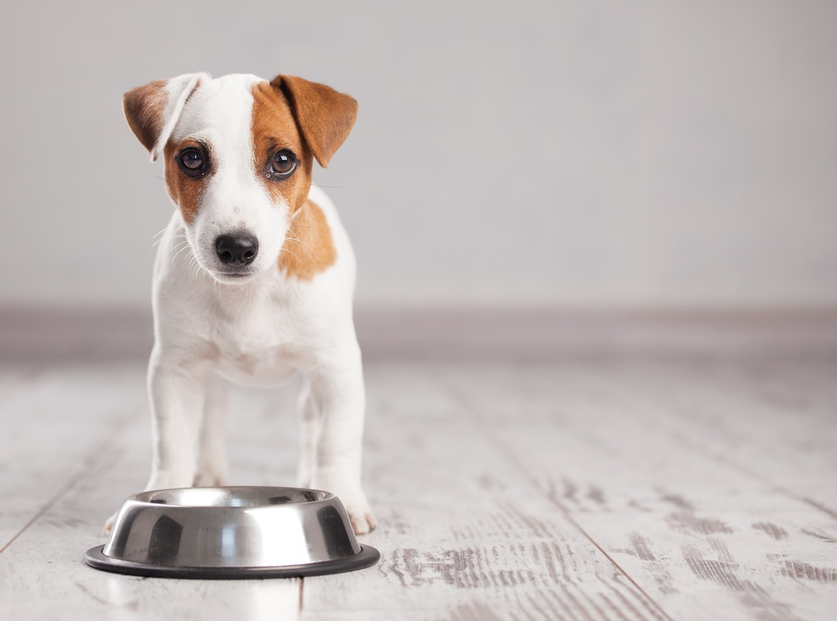 mixing raw food with kibble