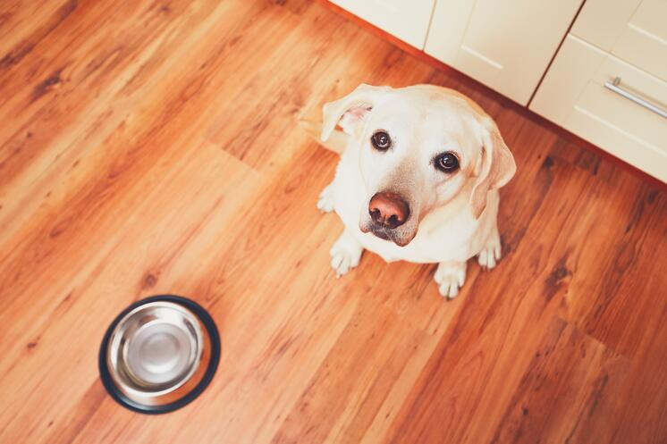 dog waiting to eat raw pet food diet