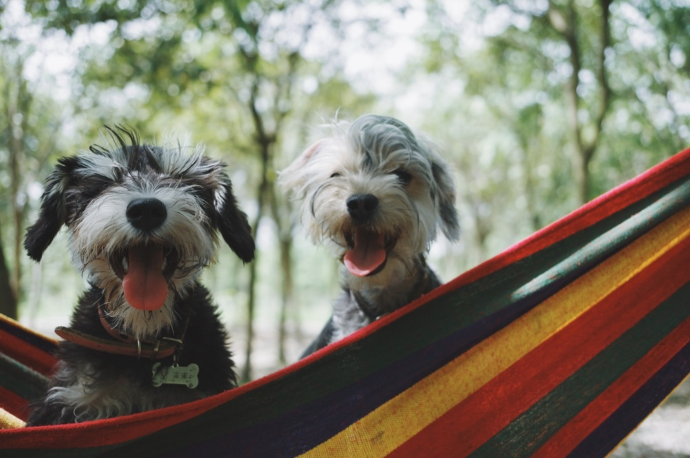 Will switching to raw pet food impact how often I feed my dog?