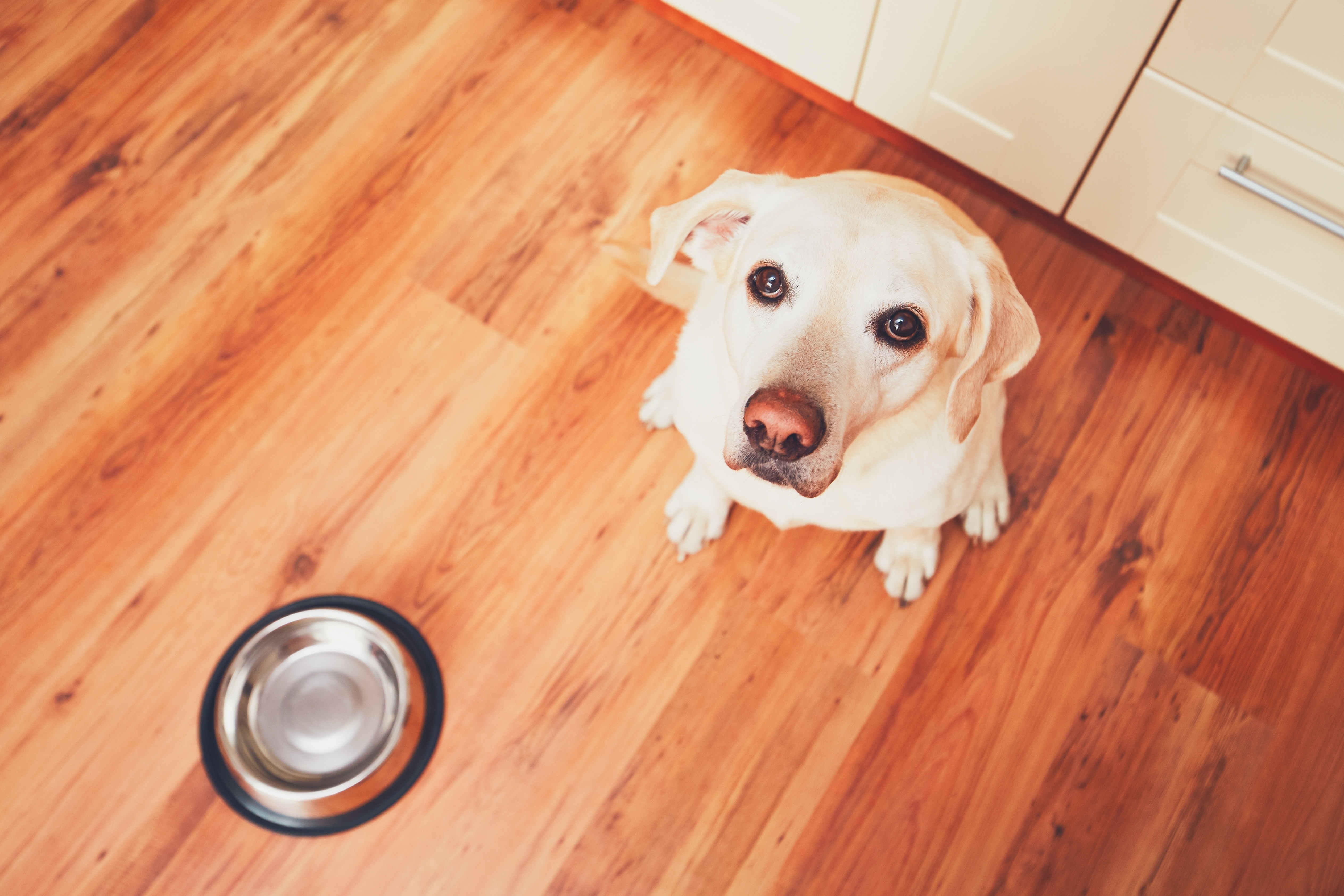My Dog Is Too Picky For A Raw Pet Food Diet