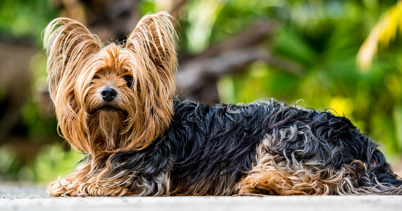 Debunking some common myths about raw dog food - Bacteria and small dogs